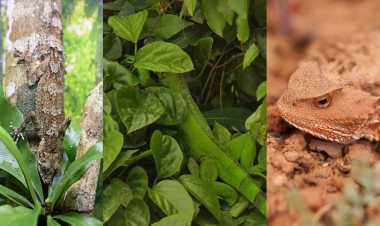 Can you spot these camouflaged creatures?